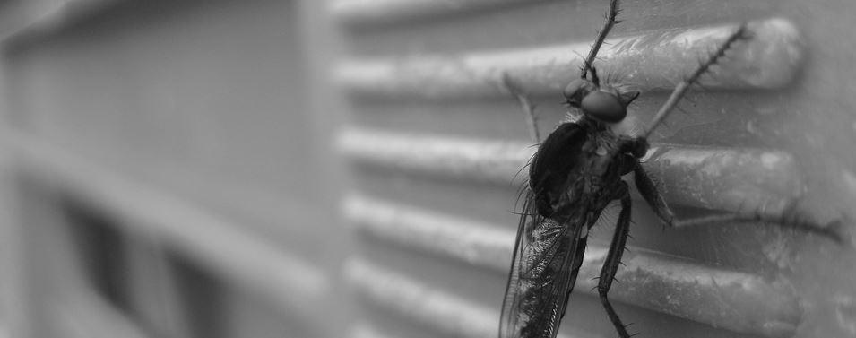Fliegengitter